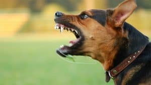 will a stun gun work on a dog