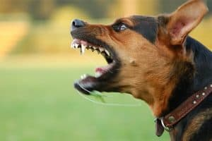 will a stun gun work on a dog